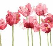 flower-flowers-pink-pressed-flowers-Favim.com-966598